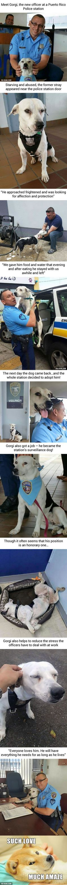 Stray Dog Walks Into Police Station, Gets A Job - 9GAG