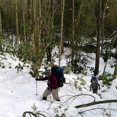 In the mountains, Otter Creek Wilderness Area, near Elkins, WV.