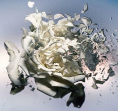 Nick Knight 2005 Exploding Rose