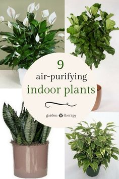 The 9 Houseplants you should grow to purify the air indoors