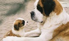 ¿Es posible alquilar un perro? Te hablamos de Rent-a-doggy