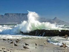 TAFEL BERG CAPE TOWN ...SOUTH AFRICA