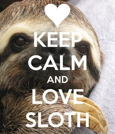 Sloth of The Day Where Sloth Lovers Talk About Sloths Untitled Animal Jokes, Funny Animal Memes, Funny Animals, Cute Animals, Sloth Memes, Animal Fun, Cute Sloth Pictures, Cute Baby Sloths, Baby Otters