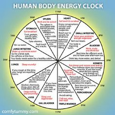 Infographic: Explore Your Human Body Energy Clock It's more of a Chinese medicine than Ayurveda. Ayurveda, Reiki, Health And Wellness, Health Tips, Health Fitness, Wellness Tips, Fitness Gear, Fitness Diet, Fitness Motivation