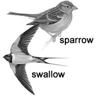 It is my geekiness that causes me to be crazy about this. STOP calling your damn swallow tattoo a SPARROW. Its a swallow. If youre going to get it permanently inked onto your body, know what type of freaking bird it is!
