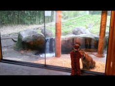 Little Boy In Tiger Costume Plays With A Tiger Cub... too cute!!