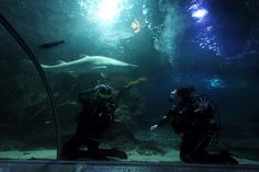 Getting to grips with underwater photography with the sharks at Deep Sea World at South Queensferry, Scotland.