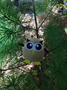 Owly wonders if he could be an outside owl (he decided he likes indoor living). Day 274 of #yearofowly #lifeofowly