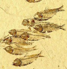 Lots of fish.....