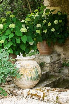 containers with hydrangeas...