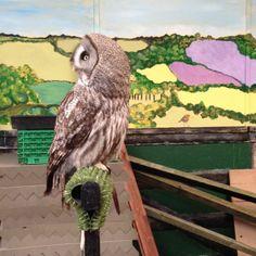 Beautiful Moonshine at Eagle Heights in Kent #owls #birdsofprey #experiencedays #kent