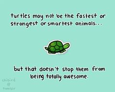 Turtle Quotes Amusing Be Inspired Behold The Turtle Quote  Pinterest  Turtle Quotes .