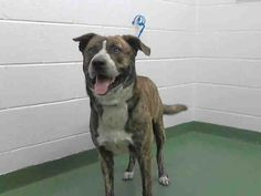 FOUND IN MANATEE COUNTY PALMETTO, FLORIDA...PetHarbor.com: Animal Shelter adopt a pet; dogs, cats, puppies, kittens! Humane Society, SPCA. Lost & Found.