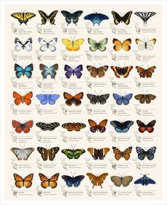Borboleta Tattoo, Butterfly Species, Butterfly Gif, Unique Butterfly Tattoos, Monarch Butterfly Tattoo, Butterfly Symbolism, Butterfly Exhibit, Butterfly Project, Rainbow Butterfly