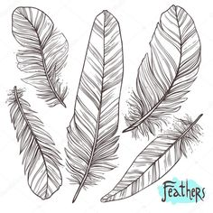 Hand drawn illustrations of feathers Illustration , Feather Illustration, Web Design, Graphic Design, How To Draw Hands, Hand Drawn, Feathers, Angels, Graphics, Illustrations