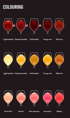 coloring beginner's guide to wine #wine #winetasting #wineeducation