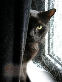 Black Cats | Catnip Camera - Cats can be shy. Their actions speak louder then words ever can. Thejavawitch