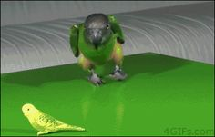bird gifs - Google Search