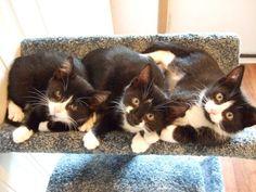 """kittens-  looks like my """"Bean"""" when she was little."""