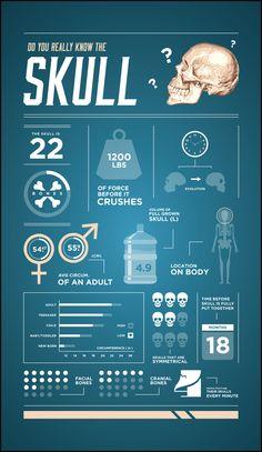 Infographics by Stephen Catapano, via Behance