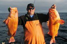Yellow eye rockfish: Kodiak Resort, The Best Alaska Fishing Lodge