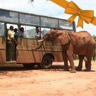 $350 A day out to Tsavo National Park in the DSWT school bus for 30 children is a wonderful way to educate children about their environment and the importance of their wildlife heritage. For many kids this is a treat they would never otherwise experience and stays with them a lifetime. - See more at: http://giftshop.sheldrickwildlifetrust.org/community-outreach/product/56-school-field-trip#sthash.2EpWICO4.dpuf