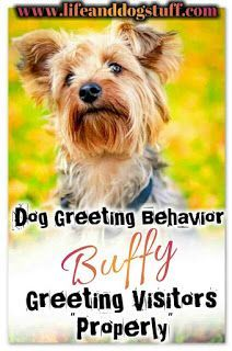 Dog Greeting Behavior - Buffy Greeting Visitors Properly. #dogs #doghumor