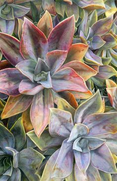 Colored Pencil Society of America News