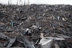 Wood waste on Vancouver Island, British Columbia.