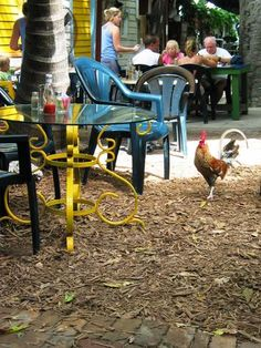 Our traditional Key West breakfast indulgence...long wait, great food, strong drinks, and unpredictable chickens.