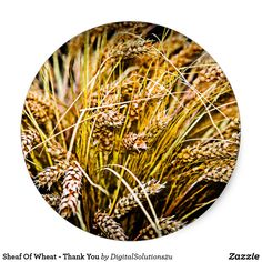 Sheaf Of Wheat - Thank You Classic Round Sticker