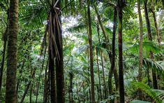 El Yunque National Forest, Puerto Rico   Nature's color palette is astounding.