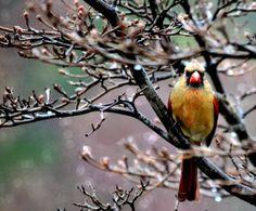 Winter Bird 8 x 10
