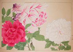 Japanese Prints - Attributed to Soun Stomach Tattoos Women, Flower Sleeve, Japanese Flowers, Japanese Prints, Flower Designs, Flower Ideas, Flower Art, Antique Prints, Body Art Tattoos