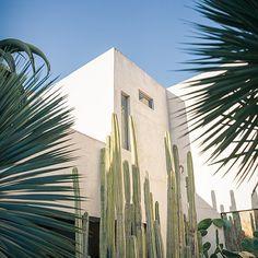 Philip Dixon's Oasis, Venice Beach