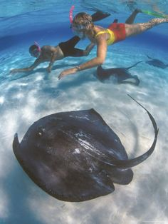 Grand Cayman Islands.. Stingray City... Did this 10 years ago. One of my favorite things ever..  Don stayed on the boat..