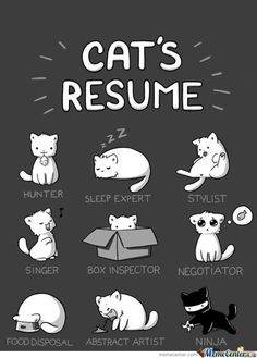 For cat lovers: A Cat's Resume! I Love Cats, Cute Cats, Funny Cats, Funny Animals, Cute Animals, Funny Horses, Adorable Kittens, Crazy Cat Lady, Crazy Cats