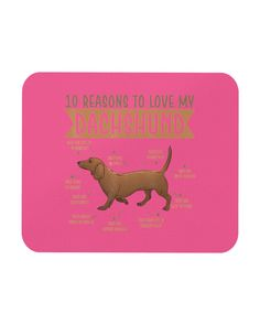 10 Reasons To Love Dachshund Best Dog - Cyber Pink furry puppy, dachshund facts, puppy dog eyeliner #doxiesofinstagram #dachshundsofinstagram #dachshundoftheday, dried orange slices, yule decorations, scandinavian christmas Dachshund Facts, Dapple Dachshund Puppy, Dachshund Tattoo, Dachshund Puppies For Sale, Dachshund Love, Dogs And Puppies, Memes Humor, Puppy Names, Puppy Clothes