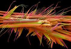 As imagens mais incríveis da ciência em 2012
