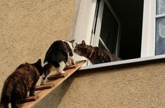 Coming up the cat ladder :) Grey Tabby Cats, White Cats, Blue Cats, Ninja Cats, Cat Window, Cat Garden, Zoo Animals, Dog Care, Cat Life