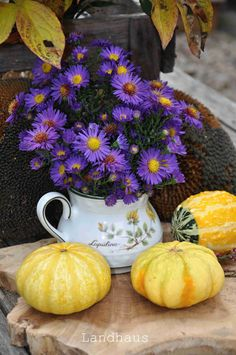Bouquet, Pumpkin, Autumn, Vegetables, Rural House, Buttercup Squash, Fall, Bouquets, Pumpkins