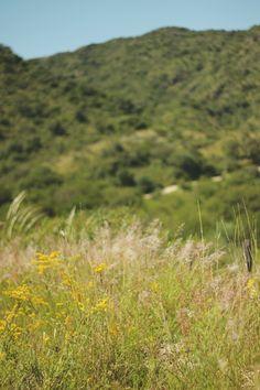 mi casita en el bosque: Un jardín lleno de vida ♥ Solidago Chilensis
