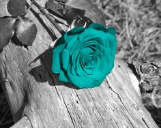 Black White Teal Wall Art Photography/Rose Flower/Floral Bedroom Home Decor Matted Picture Verde Tiffany, Azul Tiffany, Teal Wall Art, Floral Wall Art, Teal Flowers, Purple Roses, Black Roses, Red Orchids, Art Flowers