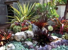 images about Rock garden ideas on Pinterest