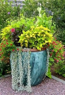 Lots of drought tolerant plants.