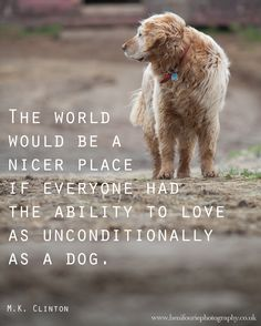 A man's best friend! Quotes - Heni Fourie Photography