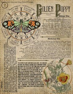 Golden Poppy 2 Book of Shadows page Ritual Poisonous Plants herbs and stones