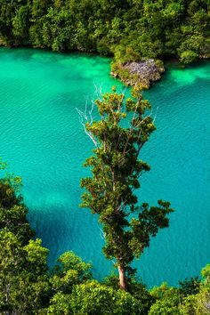 Pianemo Islands (Raja Ampat) 20 by Roy Singh on 500pxJoin with us at International Research Community and Travel Guides = https://www.facebook.com/groups/1547062925573513/