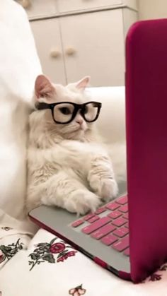 Businessmen And Luxury Laptops - Funny Animals - Nice cat