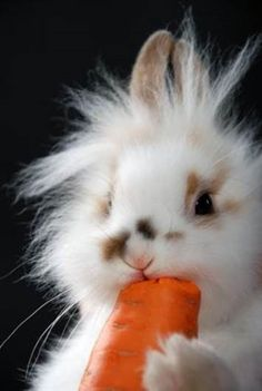 Bunny gets big carrot for international rabbit day    Games Forums Home  